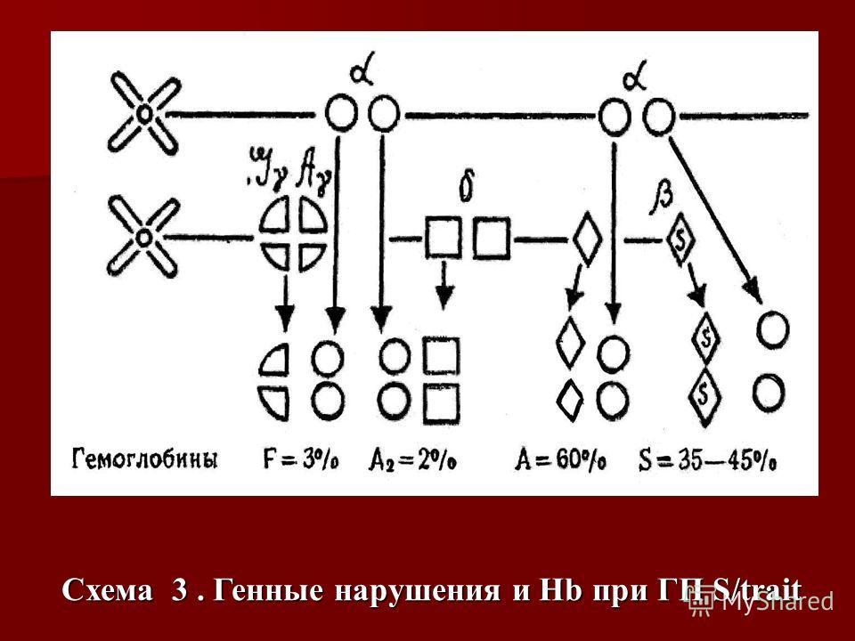 Схема 3. Генные нарушения и Hb при ГП S/trait
