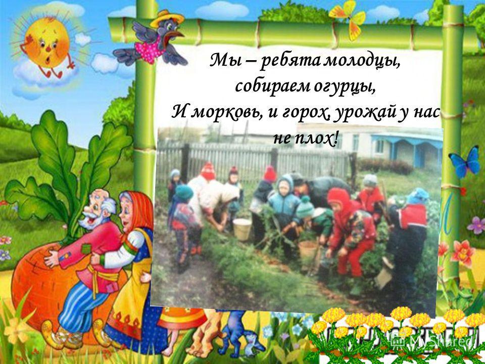 Мы – ребята молодцы, собираем огурцы, И морковь, и горох, урожай у нас не плох!