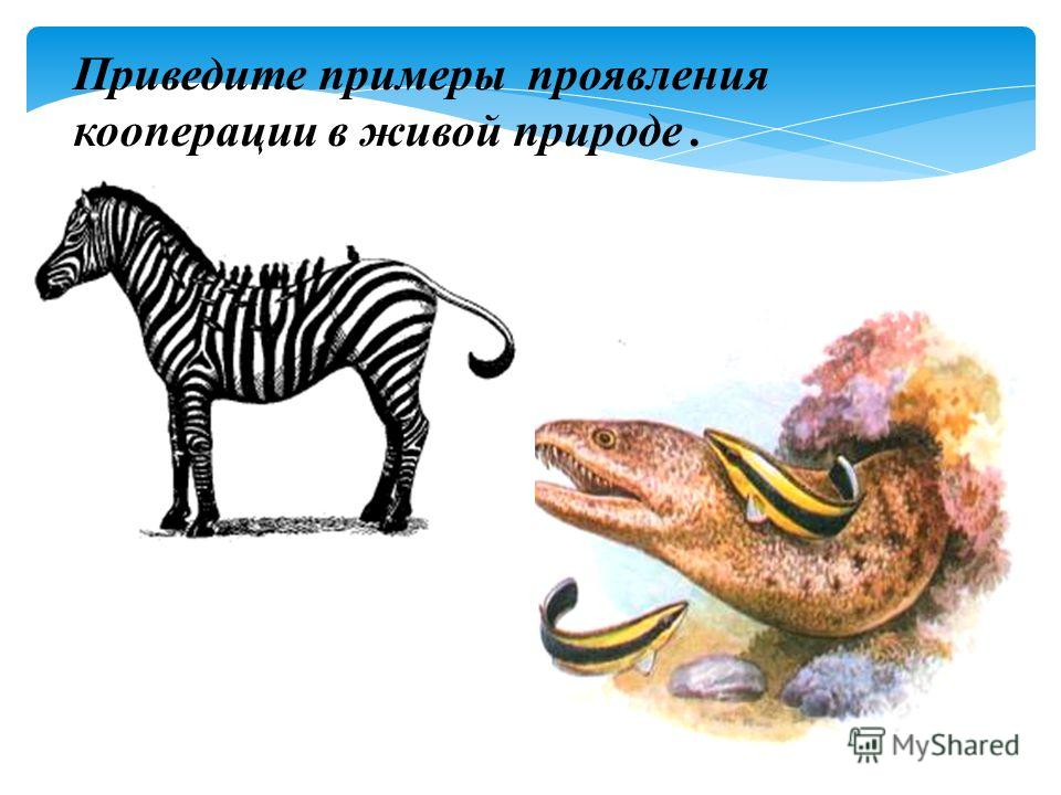 Приведите примеры проявления кооперации в живой природе.