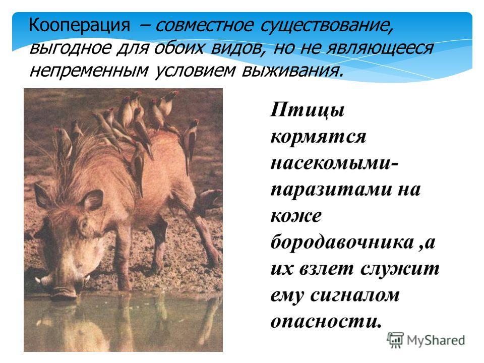 Кооперация – совместное существование, выгодное для обоих видов, но не являющееся непременным условием выживания.