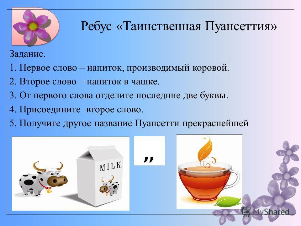 Ребус «Таинственная Пуансеттия» Задание. 1. Первое слово – напиток, производимый коровой. 2. Второе слово – напиток в чашке. 3. От первого слова отделите последние две буквы. 4. Присоедините второе слово. 5. Получите другое название Пуансетти прекрас
