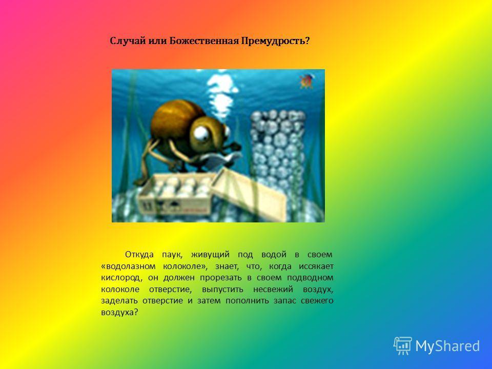 Откуда паук, живущий под водой в своем «водолазном колоколе», знает, что, когда иссякает кислород, он должен прорезать в своем подводном колоколе отверстие, выпустить несвежий воздух, заделать отверстие и затем пополнить запас свежего воздуха? Случай