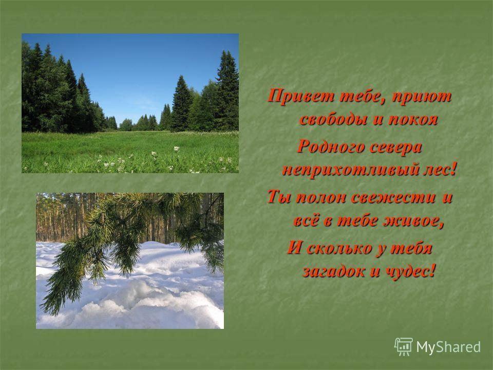 Привет тебе, приют свободы и покоя Родного севера неприхотливый лес ! Ты полон свежести и всё в тебе живое, И сколько у тебя загадок и чудес !