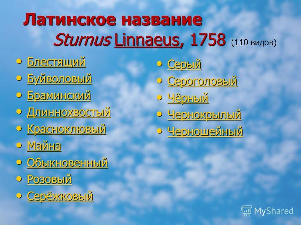 Латинское название Sturnus Linnaeus, 1758 Латинское название Sturnus Linnaeus, 1758 (110 видов) Блестящий Блестящий Блестящий Буйволовый Буйволовый Буйволовый Браминский Браминский Браминский Длиннохвостый Длиннохвостый Длиннохвостый Красноклювый Кра