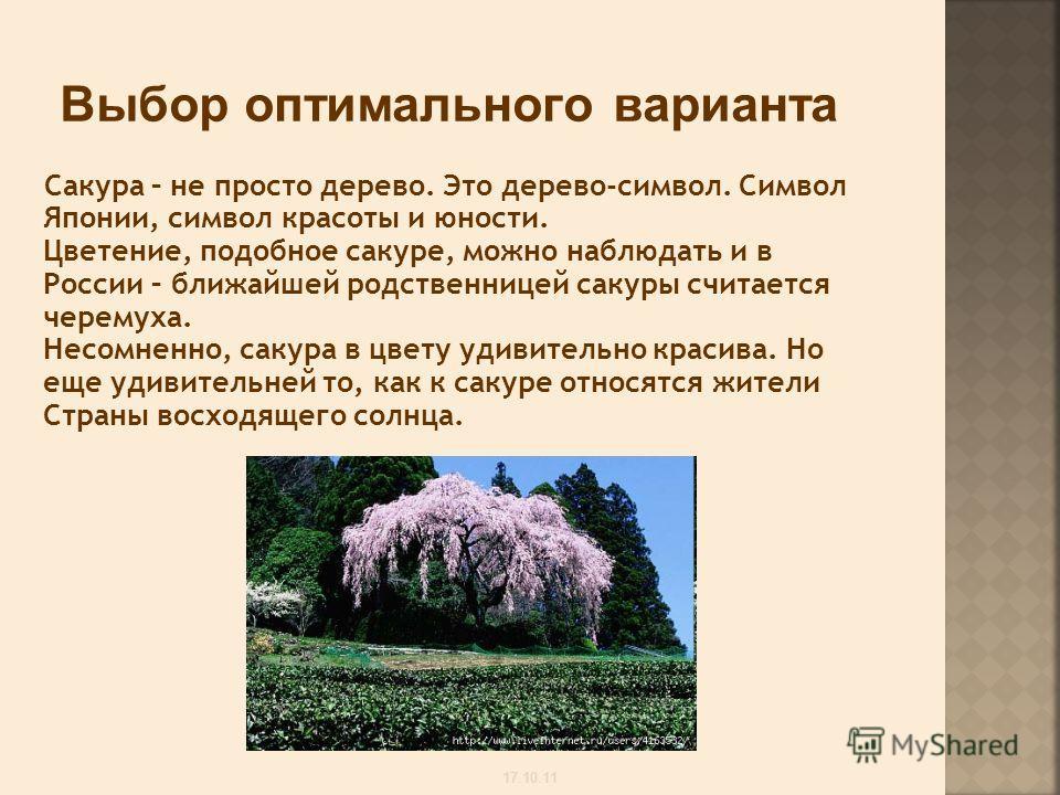 Сакура – не просто дерево. Это дерево-символ. Символ Японии, символ красоты и юности. Цветение, подобное сакуре, можно наблюдать и в России – ближайшей родственницей сакуры считается черемуха. Несомненно, сакура в цвету удивительно красива. Но еще уд