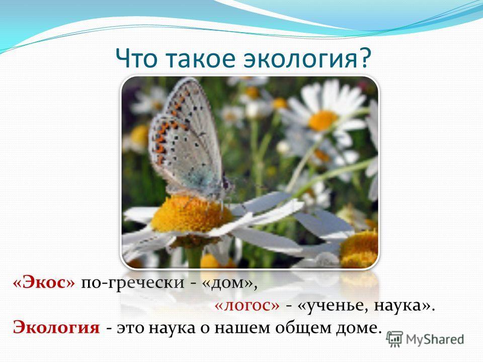 Что такое экология? «Экос» по-гречески - «дом», «логос» - «ученье, наука». Экология - это наука о нашем общем доме.