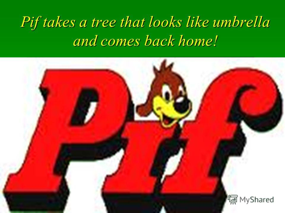 Pif takes a tree that looks like umbrella and comes back home!