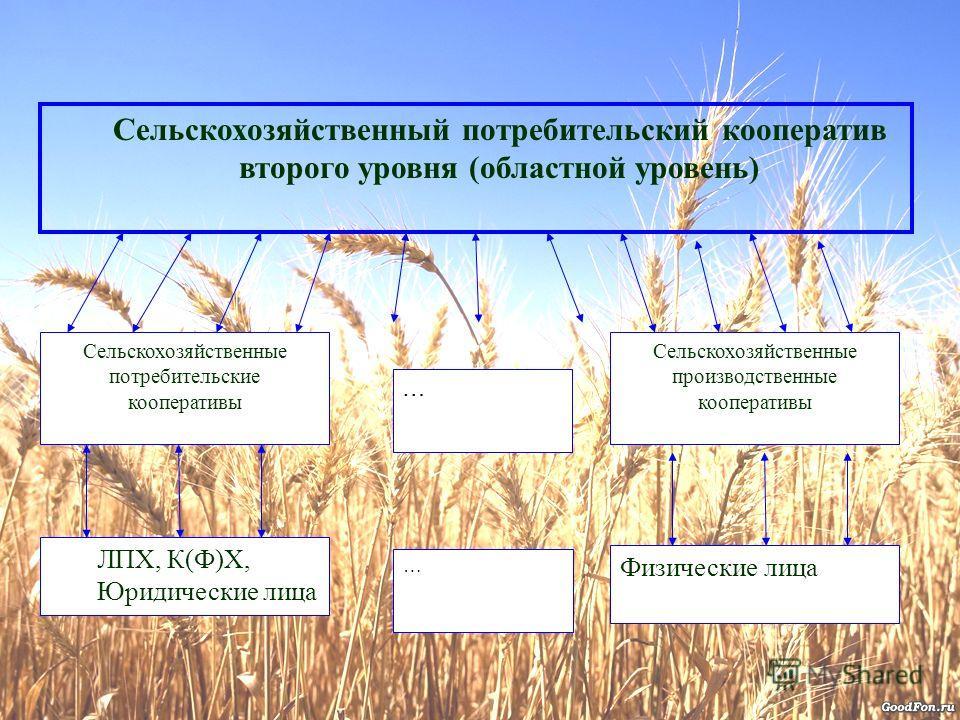 Сельскохозяйственный потребительский кооператив второго уровня (областной уровень) Сельскохозяйственные потребительские кооперативы Сельскохозяйственные производственные кооперативы ЛПХ, К(Ф)Х, Юридические лица Физические лица … …