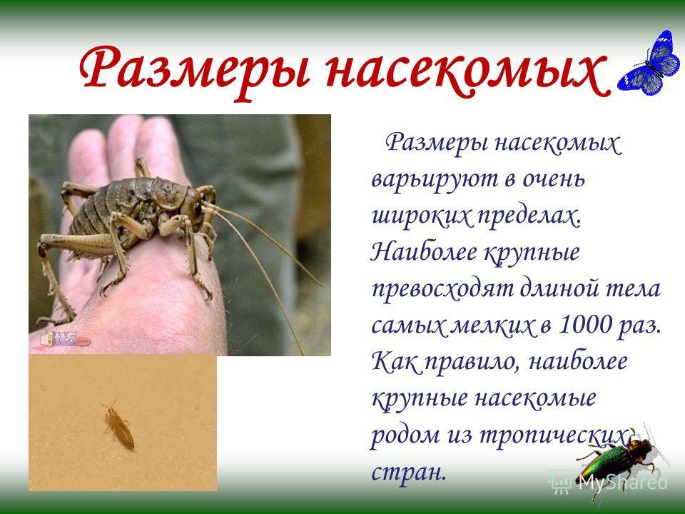 Размеры насекомых Размеры насекомых варьируют в очень широких пределах. Наиболее крупные превосходят длиной тела самых мелких в 1000 раз. Как правило, наиболее крупные насекомые родом из тропических стран.