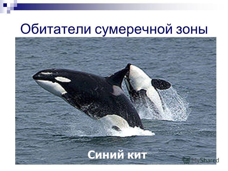 Обитатели сумеречной зоны Синий кит