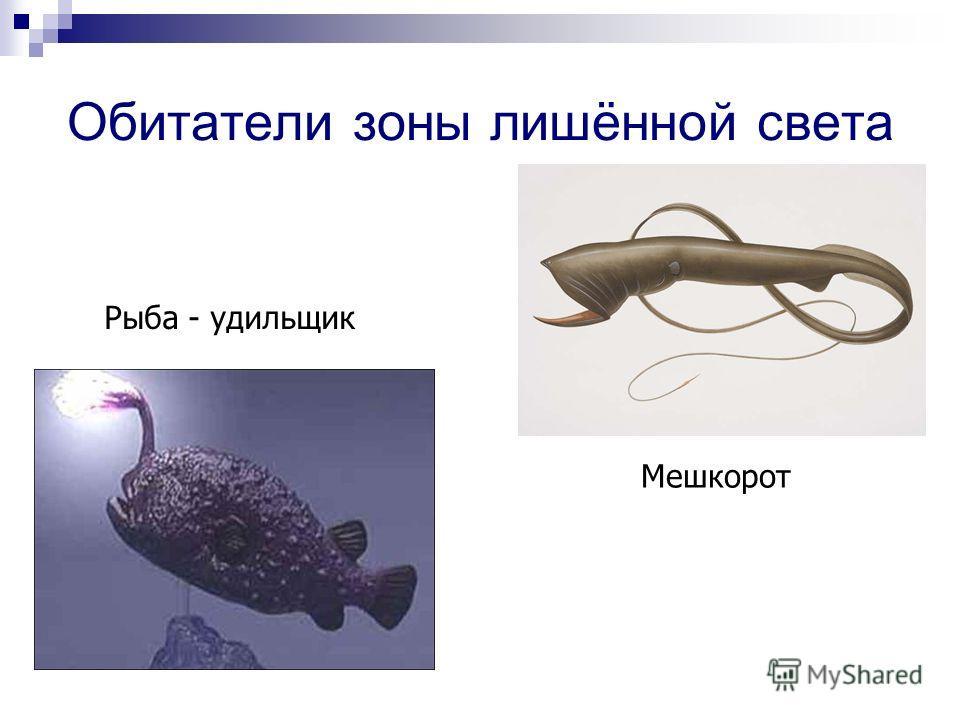 Обитатели зоны лишённой света Рыба - удильщик Мешкорот