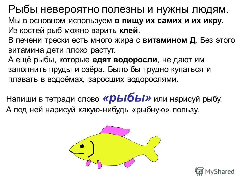 Рыбы невероятно полезны и нужны людям. Мы в основном используем в пищу их самих и их икру. Из костей рыб можно варить клей. В печени трески есть много жира с витамином Д. Без этого витамина дети плохо растут. А ещё рыбы, которые едят водоросли, не да