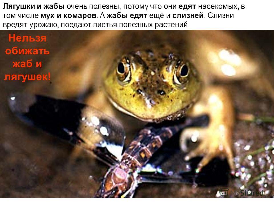 Лягушки и жабы очень полезны, потому что они едят насекомых, в том числе мух и комаров. А жабы едят ещё и слизней. Слизни вредят урожаю, поедают листья полезных растений. Нельзя обижать жаб и лягушек!