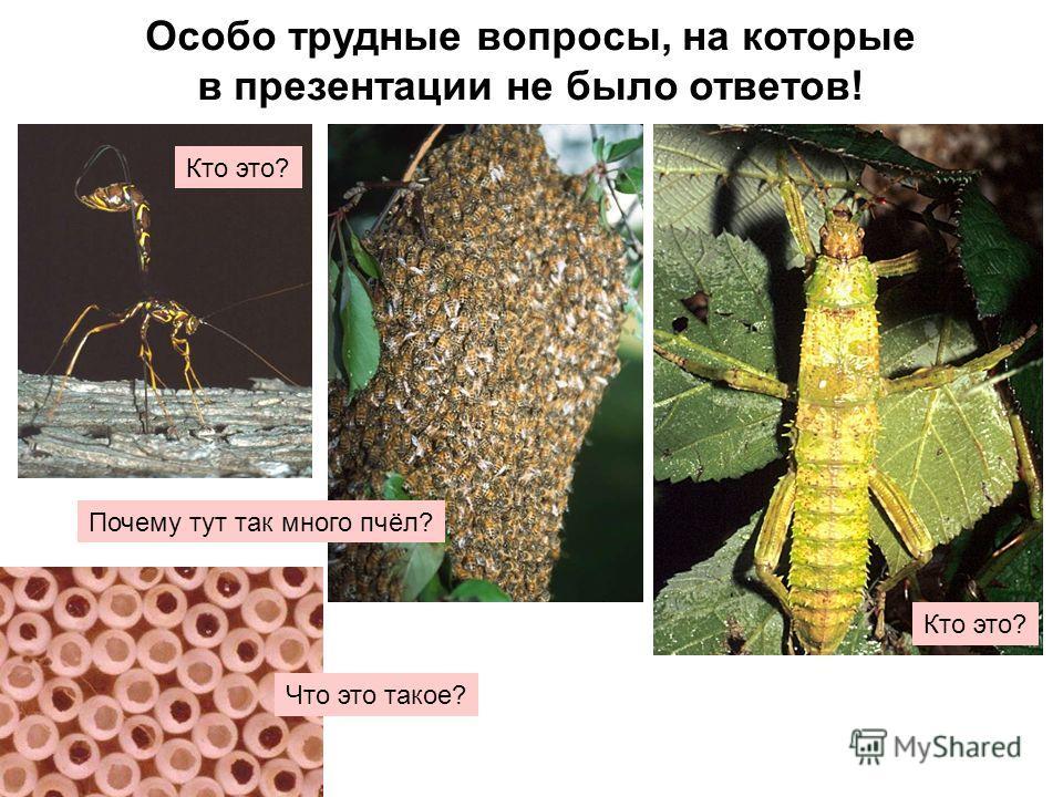 Особо трудные вопросы, на которые в презентации не было ответов! Кто это? Почему тут так много пчёл? Кто это? Что это такое?