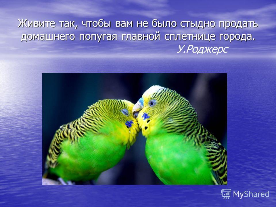 Живите так, чтобы вам не было стыдно продать домашнего попугая главной сплетнице города. Живите так, чтобы вам не было стыдно продать домашнего попугая главной сплетнице города. У.Роджерс