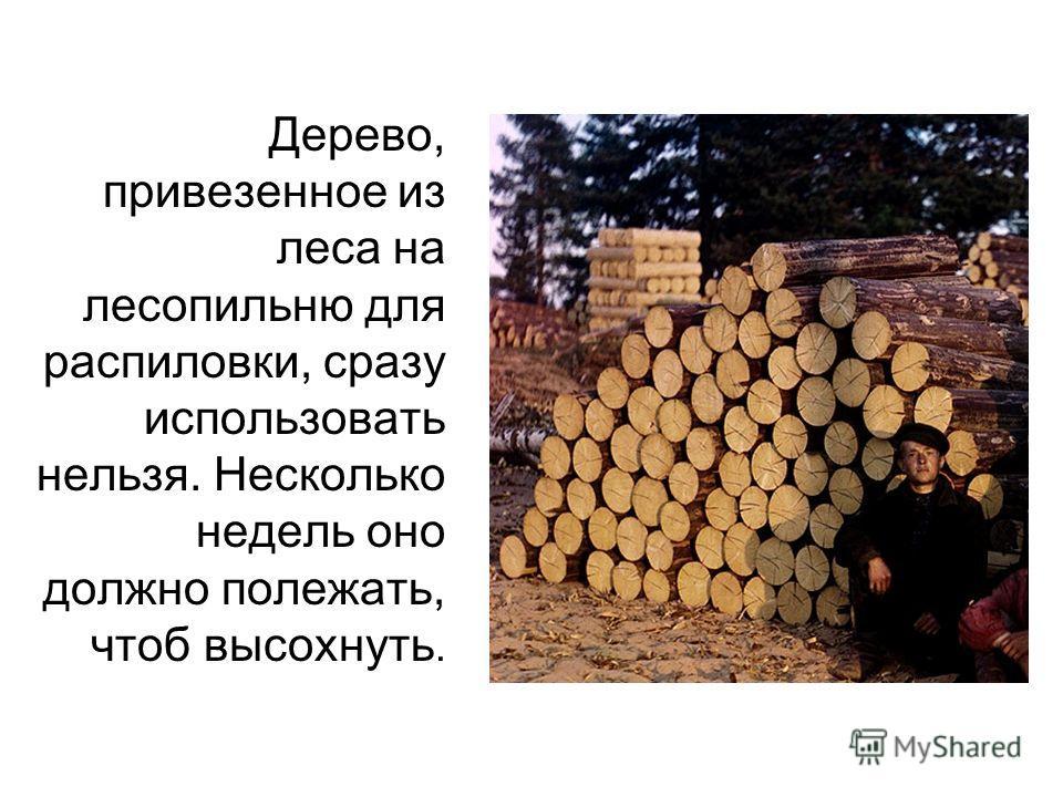 Дерево, привезенное из леса на лесопильню для распиловки, сразу использовать нельзя. Несколько недель оно должно полежать, чтоб высохнуть.