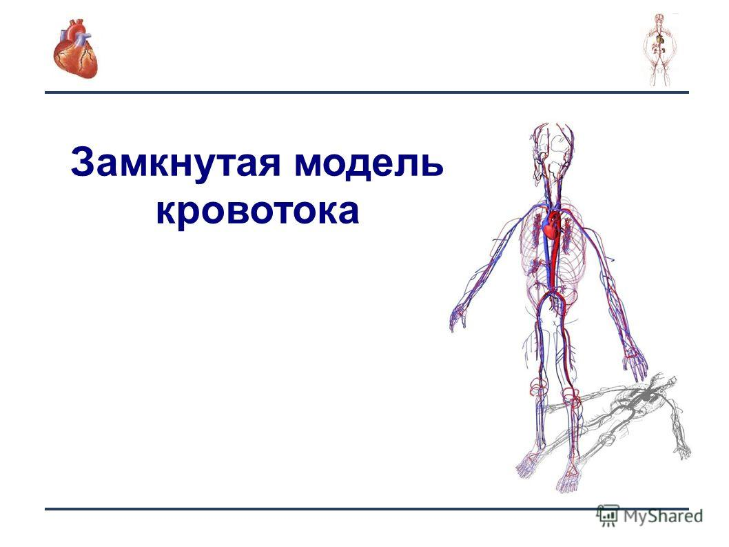 6 Замкнутая модель кровотока