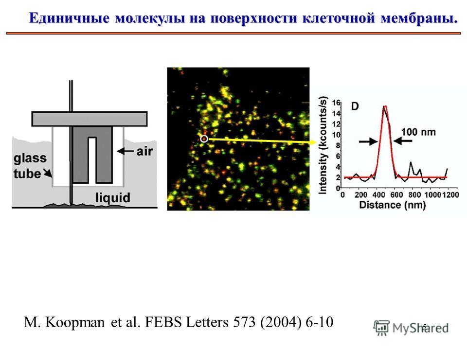 5 Единичные молекулы на поверхности клеточной мембраны. M. Koopman et al. FEBS Letters 573 (2004) 6-10