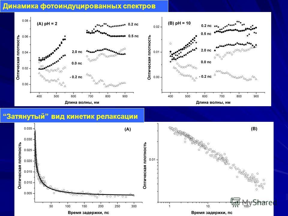 Динамика фотоиндуцированных спектров Затянутый вид кинетик релаксации