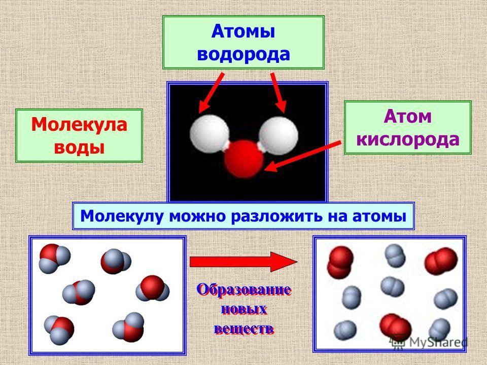 Молекула воды Атомы водорода Атом кислорода Молекулу можно разложить на атомы Образование новых веществ