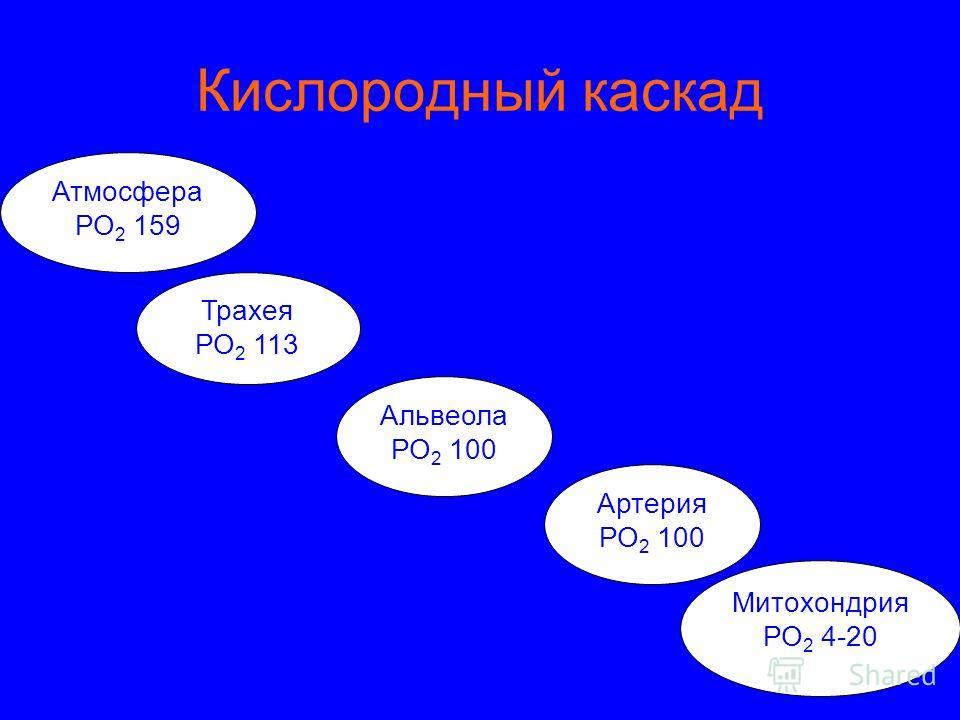 Кислородный каскад Атмосфера РО 2 159 Трахея РО 2 113 Альвеола РО 2 100 Артерия РО 2 100 Митохондрия РО 2 4-20