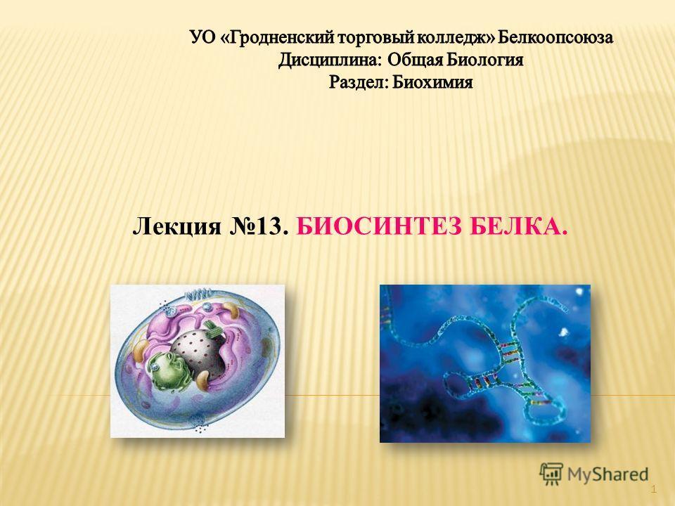Лекция 13. БИОСИНТЕЗ БЕЛКА. 1