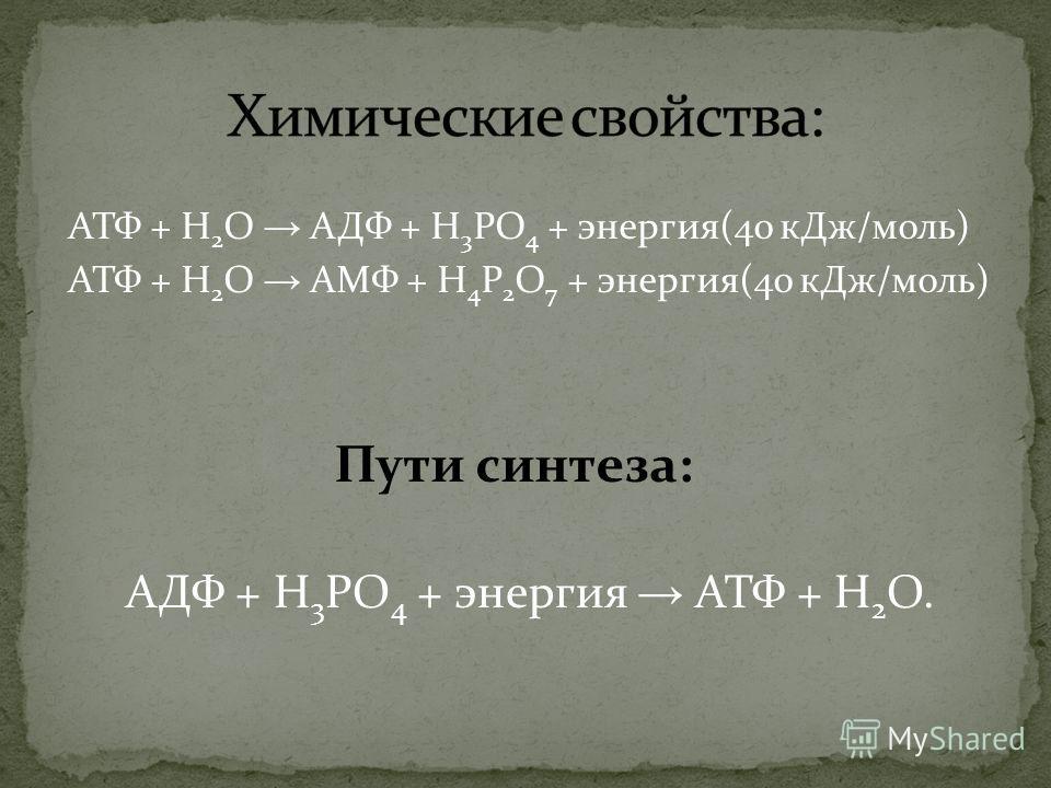 АТФ + H 2 O АДФ + H 3 PO 4 + энергия(40 кДж/моль) АТФ + H 2 O АМФ + H 4 P 2 O 7 + энергия(40 кДж/моль) Пути синтеза: АДФ + H 3 PO 4 + энергия АТФ + H 2 O.