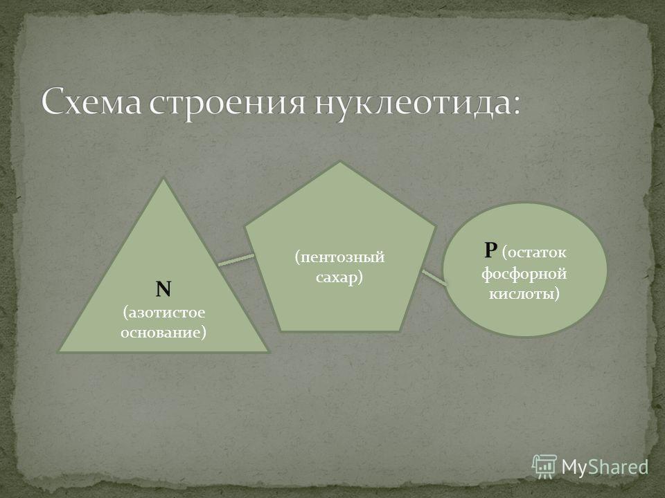 N (азотистое основание) Р (остаток фосфорной кислоты) (пентозный сахар)