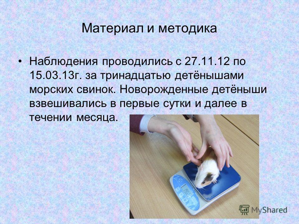 Материал и методика Наблюдения проводились с 27.11.12 по 15.03.13г. за тринадцатью детёнышами морских свинок. Новорожденные детёныши взвешивались в первые сутки и далее в течении месяца.