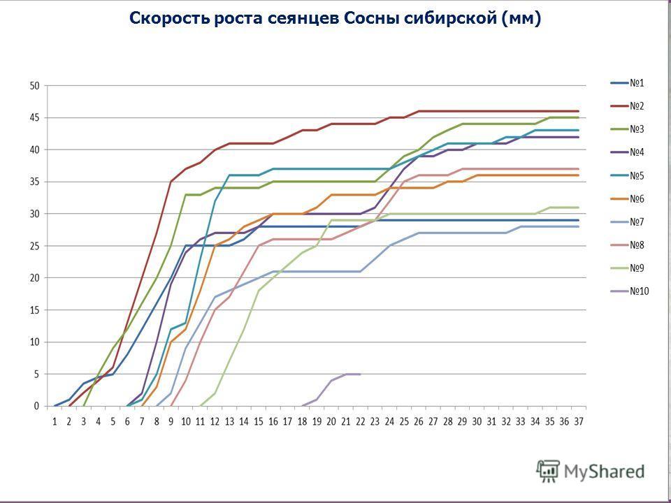 Скорость роста сеянцев Сосны сибирской (мм)