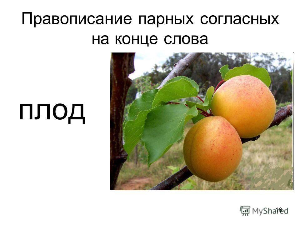 Правописание парных согласных на конце слова плод 16