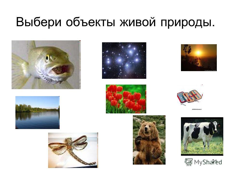 Выбери объекты живой природы. 21