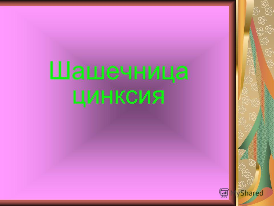 Шашечница цинксия
