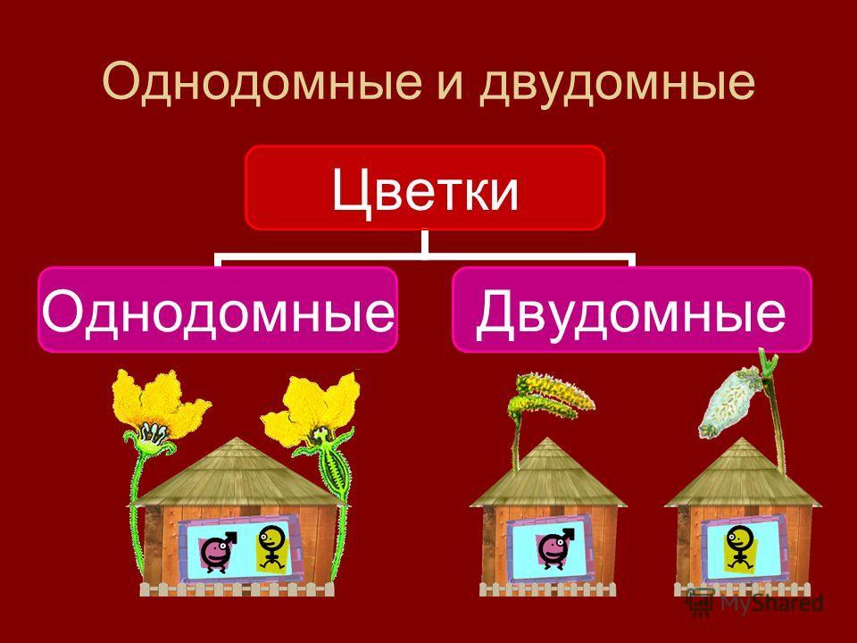 Однодомные и двудомные Цветки ОднодомныеДвудомные