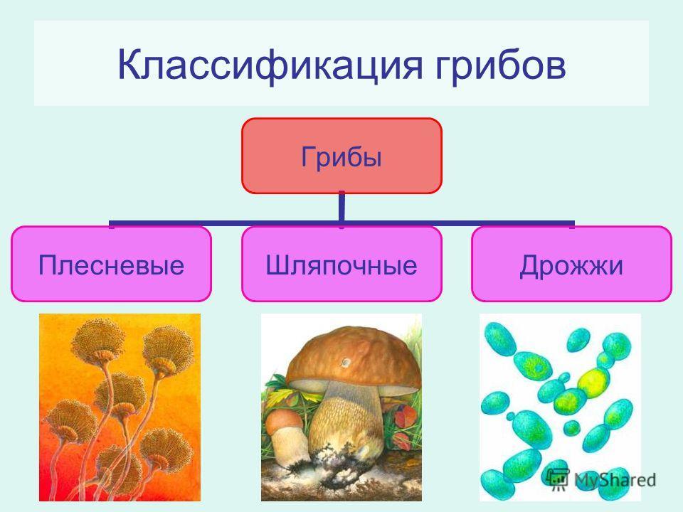 грибы высшей категории фото