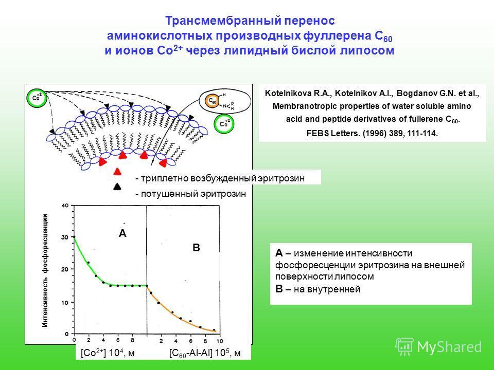 Трансмембранный перенос аминокислотных производных фуллерена С 60 и ионов Co 2+ через липидный бислой липосом Kotelnikova R.A., Kotelnikov A.I., Bogdanov G.N. et al., Membranotropic properties of water soluble amino acid and peptide derivatives of fu