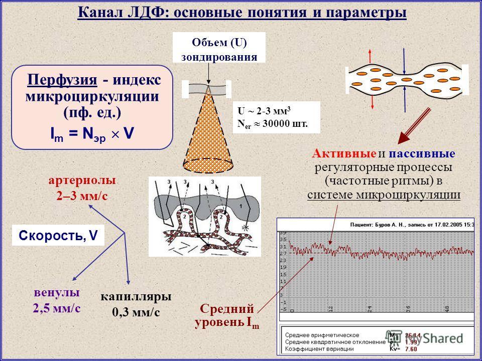 Объем (U) зондирования U 2-3 мм 3 N er 30000 шт. Канал ЛДФ: основные понятия и параметры Перфузия - индекс микроциркуляции (пф. ед.) I m = N эр V артериолы 2–3 мм/с капилляры 0,3 мм/с венулы 2,5 мм/с Скорость, V Средний уровень I m Активные и пассивн