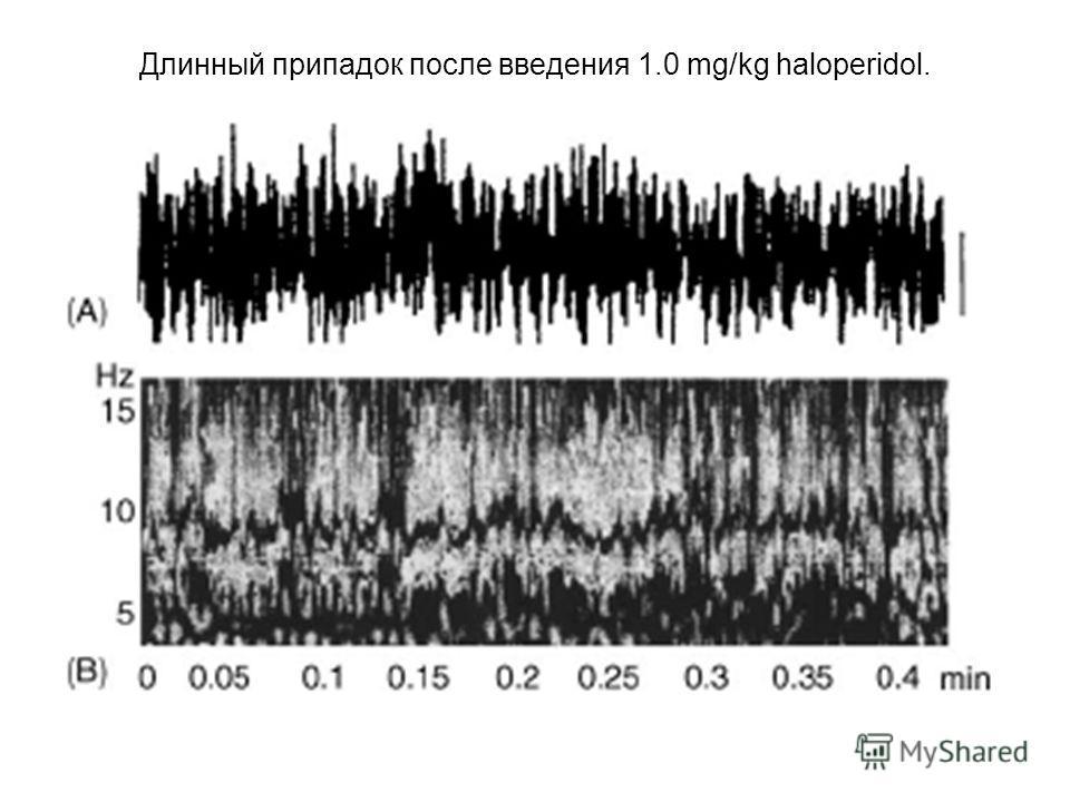 Длинный припадок после введения 1.0 mg/kg haloperidol. Калибровка 500 µV