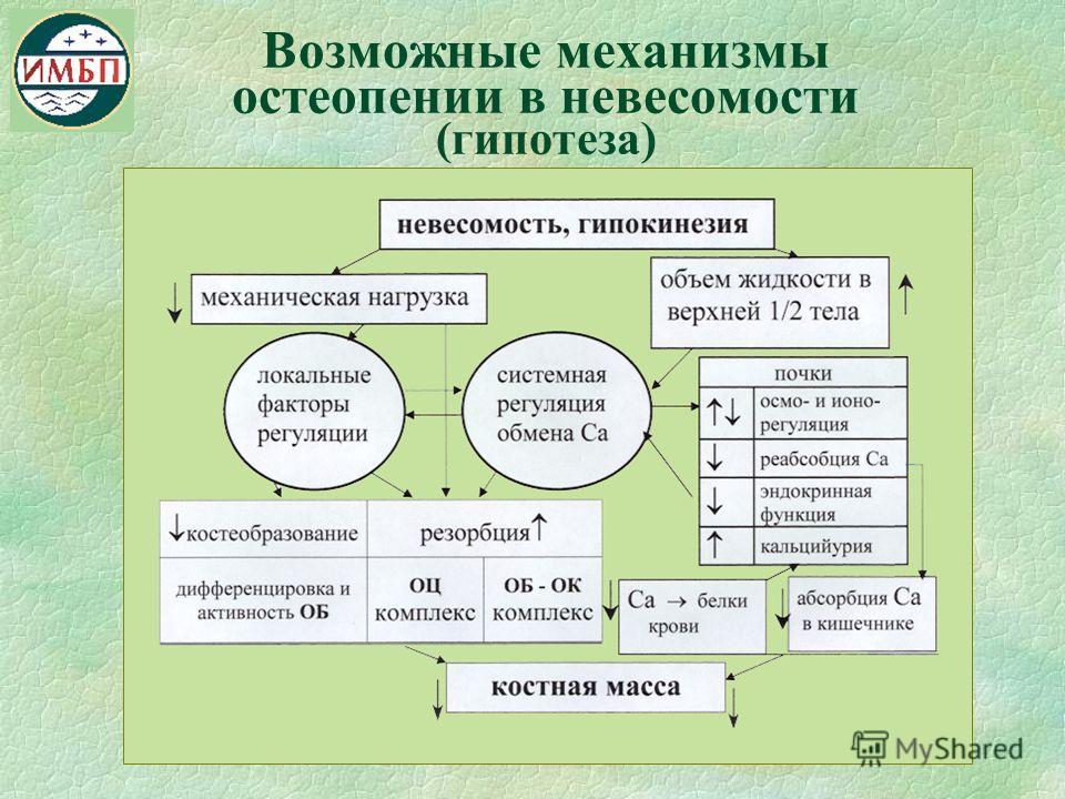 Возможные механизмы остеопении в невесомости (гипотеза)