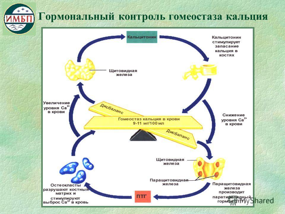 Гормональный контроль гомеостаза кальция