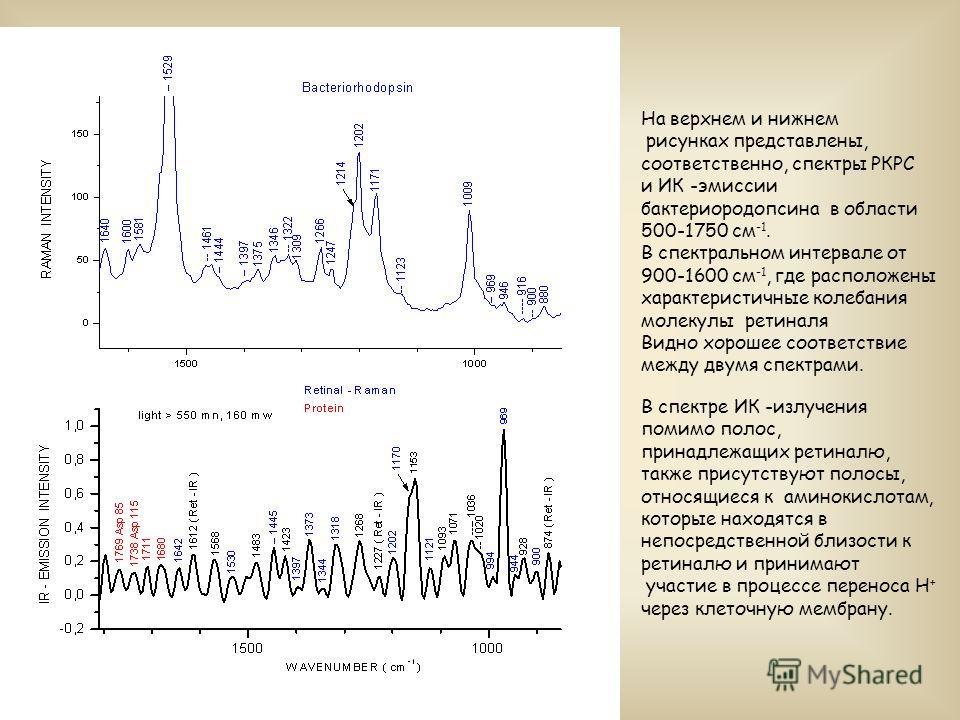 На верхнем и нижнем рисунках представлены, соответственно, спектры РКРС и ИК -эмиссии бактериородопсина в области 500-1750 см -1. В спектральном интервале от 900-1600 см -1, где расположены характеристичные колебания молекулы ретиналя Видно хорошее с