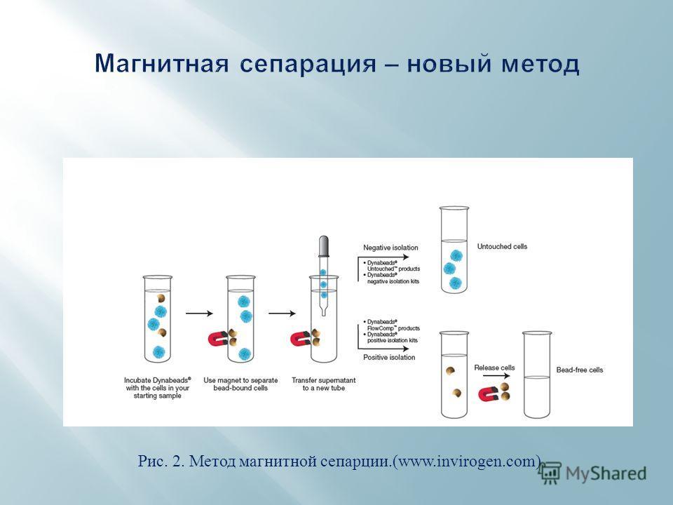 Рис. 2. Метод магнитной сепарции.(www.invirogen.com)