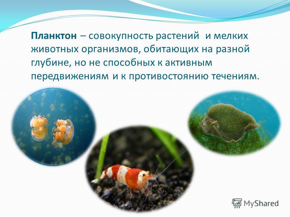 Планктон – совокупность растений и мелких животных организмов, обитающих на разной глубине, но не способных к активным передвижениям и к противостоянию течениям.