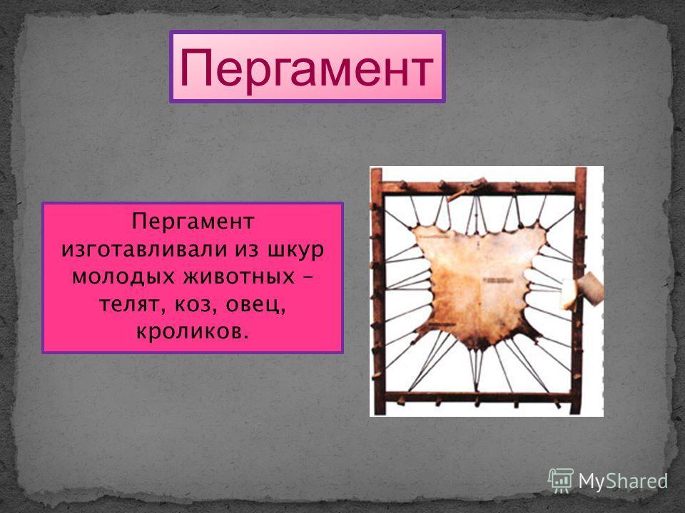 Пергамент Пергамент изготавливали из шкур молодых животных – телят, коз, овец, кроликов.