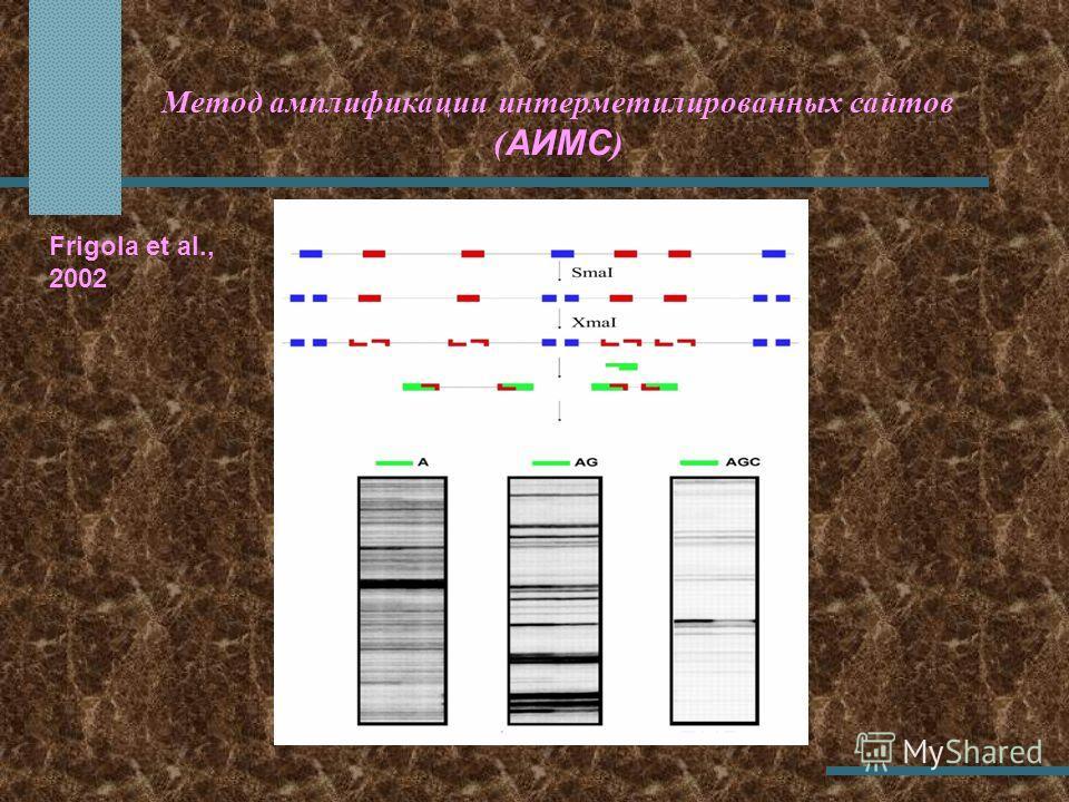 Метод амплификации интерметилированных сайтов ( АИМС ) Frigola et al., 2002