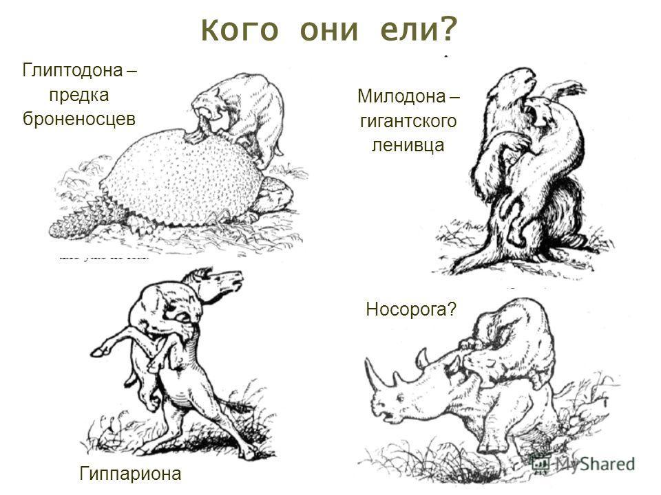 Кого они ели? Милодона – гигантского ленивца Глиптодона – предка броненосцев Гиппариона Носорога?
