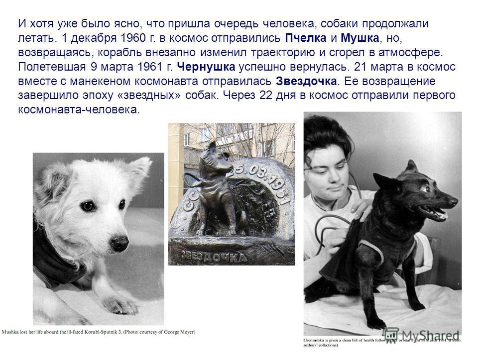 И хотя уже было ясно, что пришла очередь человека, собаки продолжали летать. 1 декабря 1960 г. в космос отправились Пчелка и Мушка, но, возвращаясь, корабль внезапно изменил траекторию и сгорел в атмосфере. Полетевшая 9 марта 1961 г. Чернушка успешно