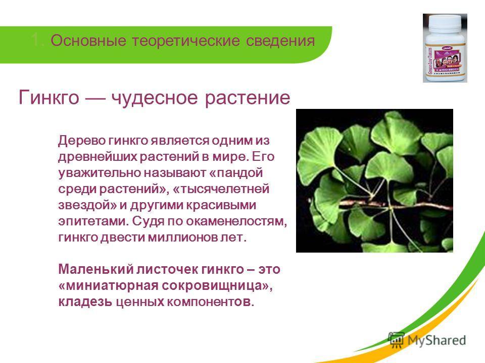 1. Основные теоретические сведения Гинкго чудесное растение Дерево гинкго является одним из древнейших растений в мире. Его уважительно называют «пандой среди растений», «тысячелетней звездой» и другими красивыми эпитетами. Судя по окаменелостям, гин