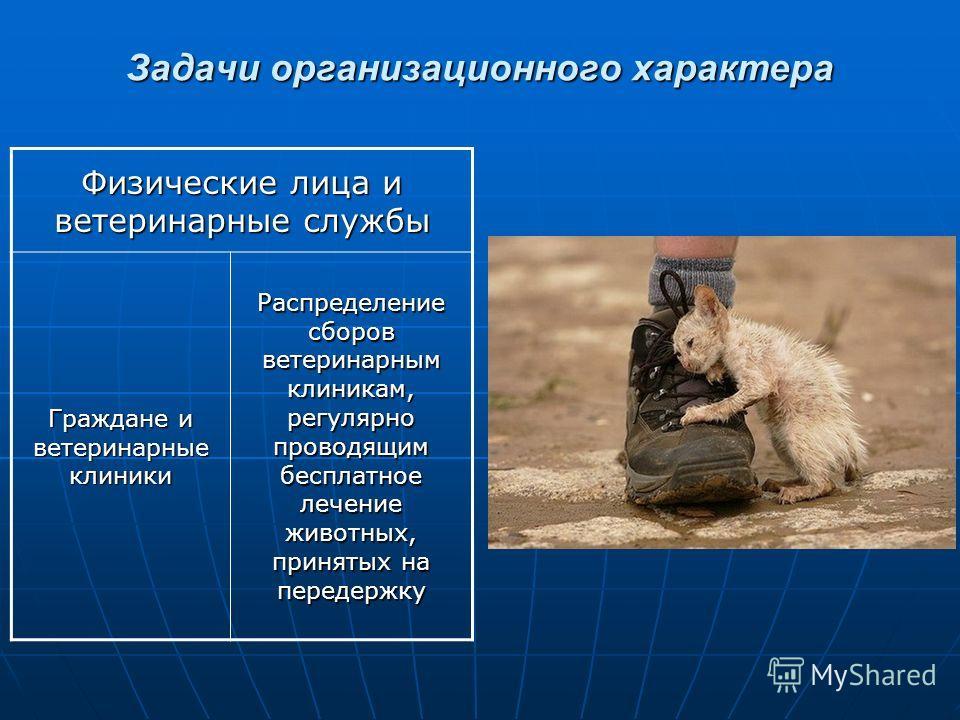 Задачи организационного характера Физические лица и ветеринарные службы Граждане и ветеринарные клиники Распределение сборов ветеринарным клиникам, регулярно проводящим бесплатное лечение животных, принятых на передержку