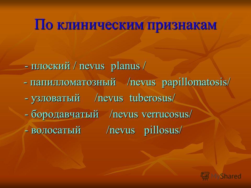 По клиническим признакам - плоский / nevus planus / - плоский / nevus planus / - папилломатозный /nevus papillomatosis/ - папилломатозный /nevus papillomatosis/ - узловатый /nevus tuberosus/ - бородавчатый /nevus verrucosus/ - волосатый /nevus pillos